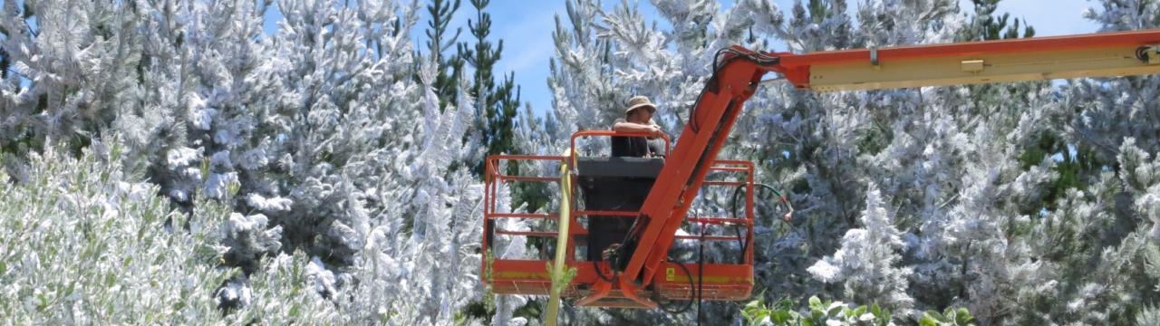 Dressing trees with snow from a cherry picker, Special Effects Snow South Africa
