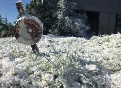 Snow effects outside, Special effects, Cape Town